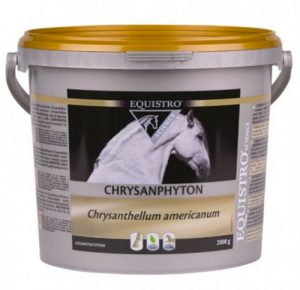 Complementary feed containing CHRYSANTHELLUM AMERICANUM. The feet of the horses are one of the essential elements for their locomotion. They are constantly solicited. For normal operation of the hooves, it is essential that the physiological blood circulation is done properly.